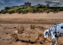 Four-legged visitor at Bamburgh Castle, Northumberland