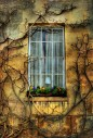 Window with flowers - Downing College, University Of Cambridge, England