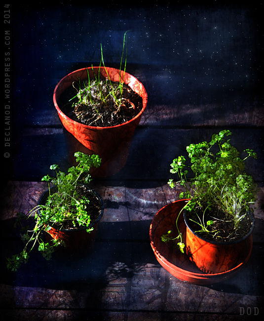 March spring flowerpots seasons nightlife spanish